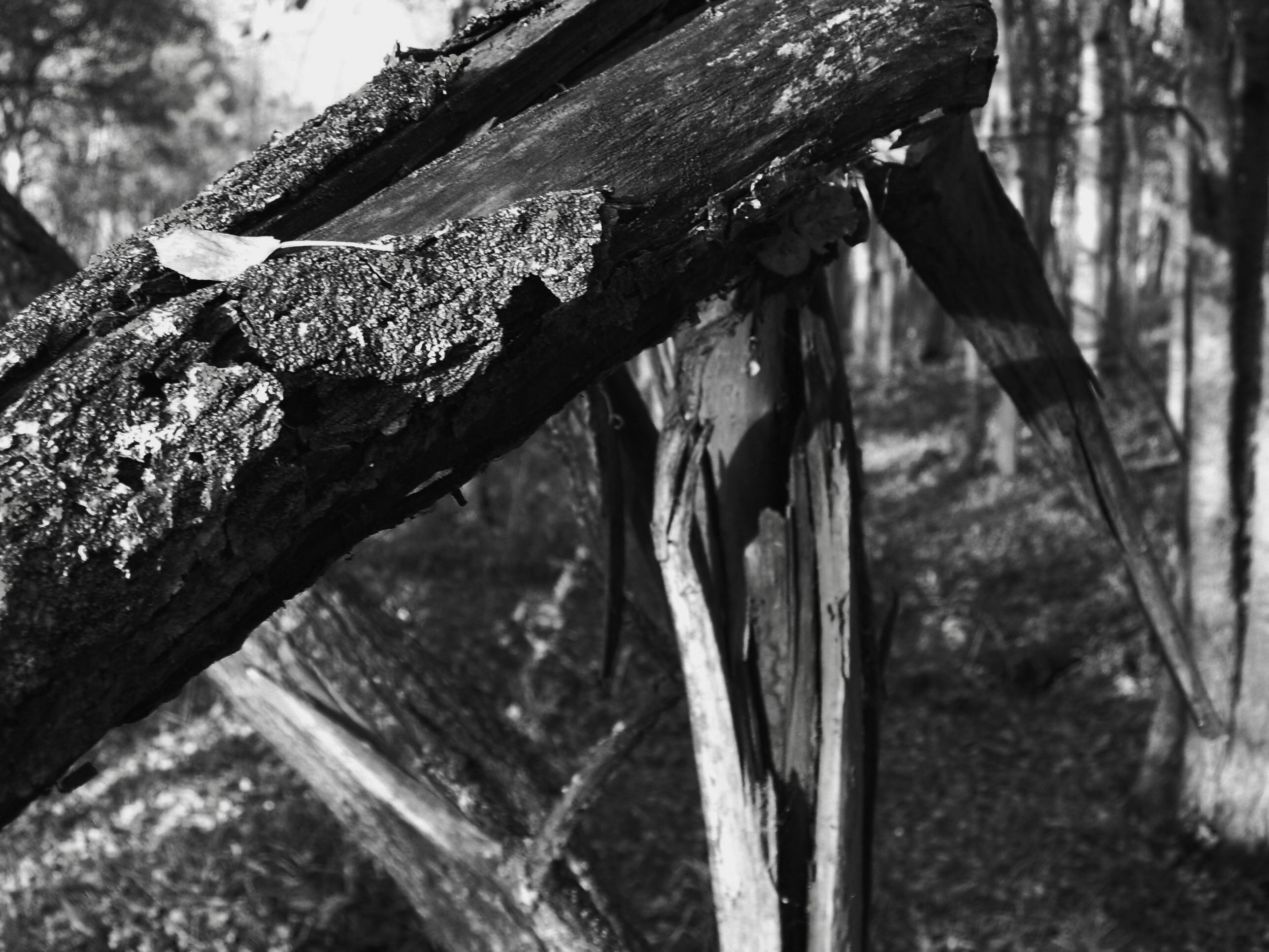 Broken_wood_-_black_and_white
